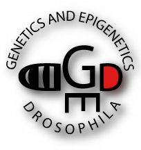 Opening in Drosophila Genetics and Epigenetics