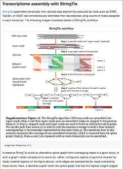 Reference based RNA seq